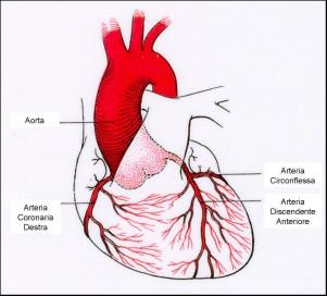 Il cuore e la sua salute aritmia tachicardia for Vasi coronarici