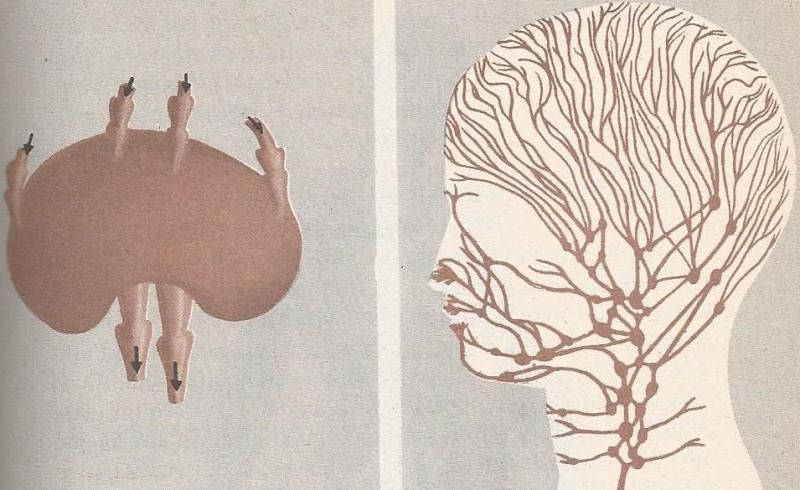 Il sangue da dorso passa il dolore nel fondo di uno stomaco al di sinistra